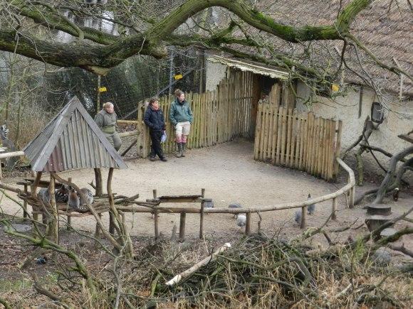 Lemur Wood